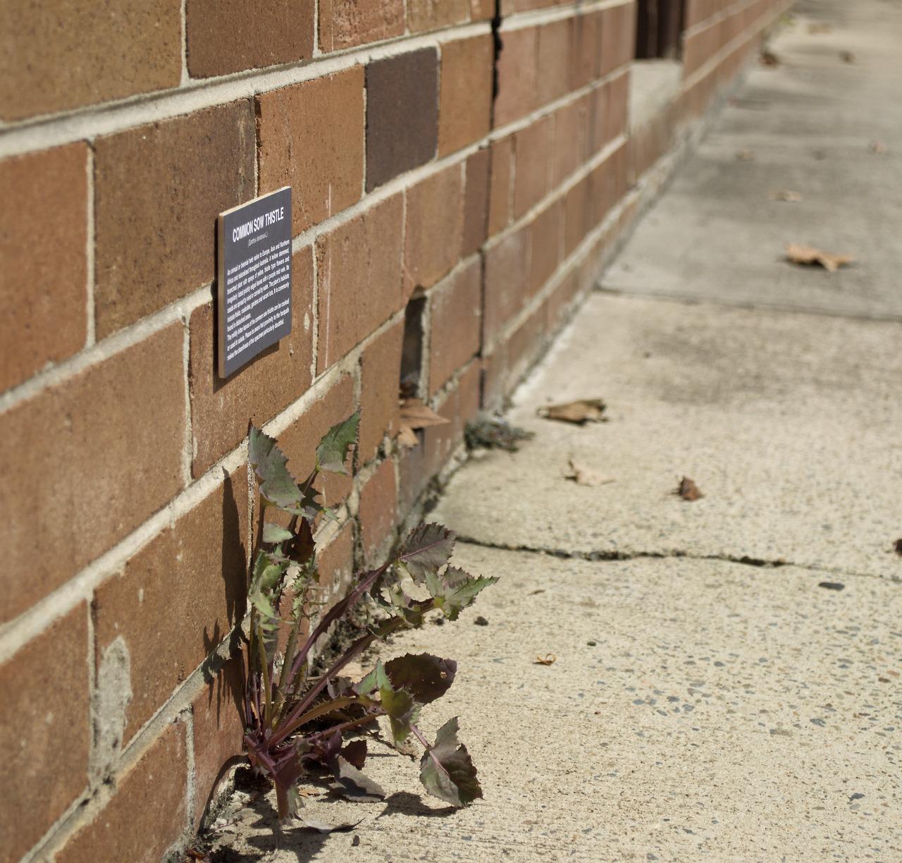 urban-botanical-wallnotes-2