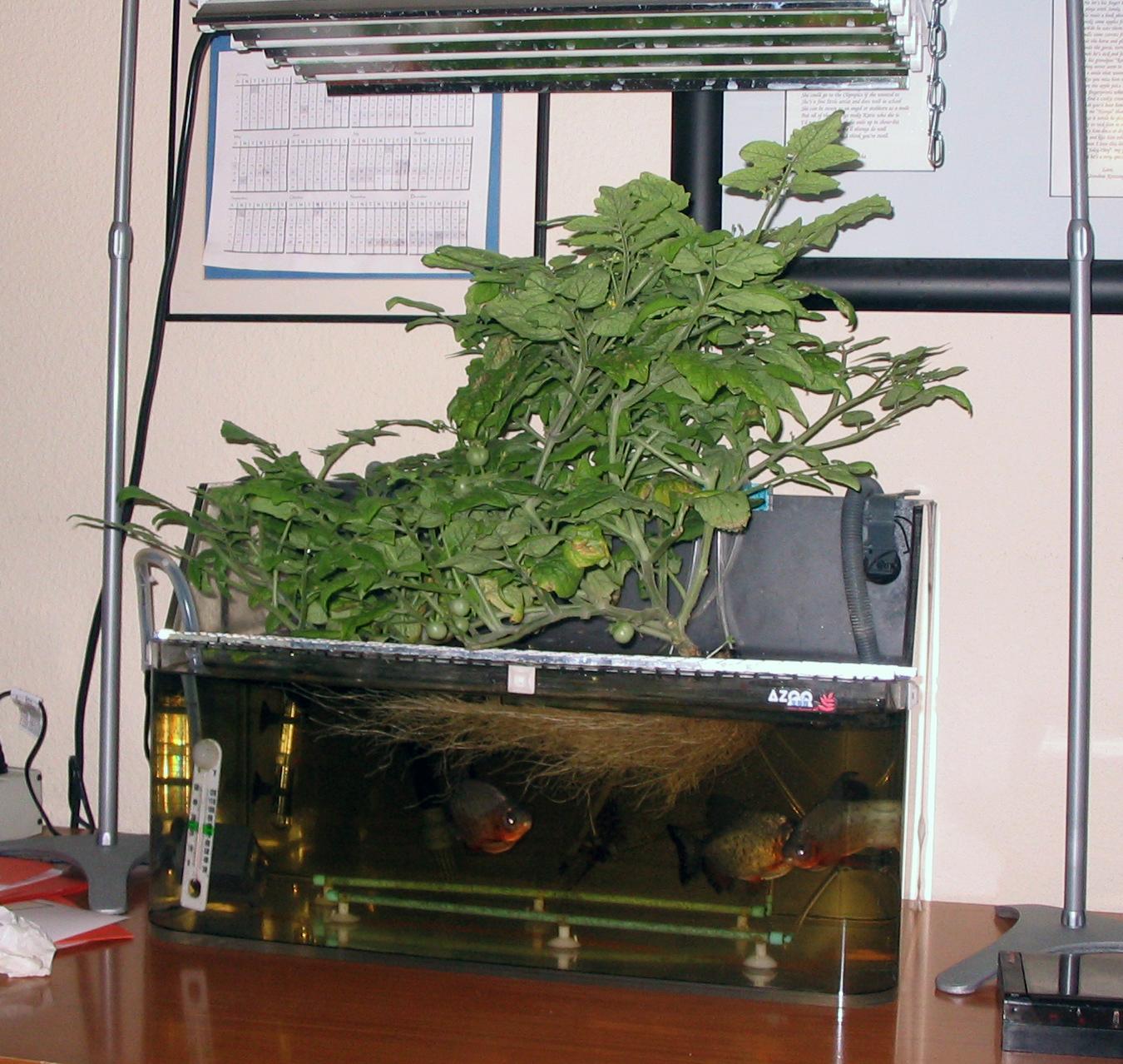 Kretzinger's first working aquaponics garden, summer 2006.