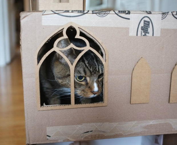 blinged-out-cat-fort-3