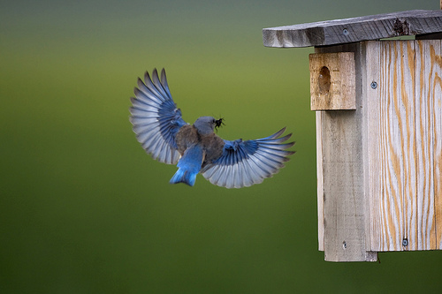 bird flying house