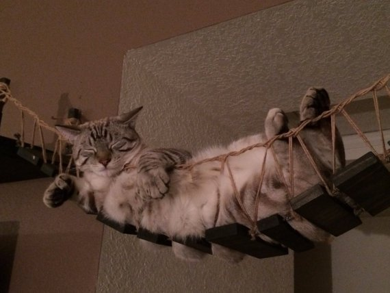 indiana-jones-cat-bridge-1