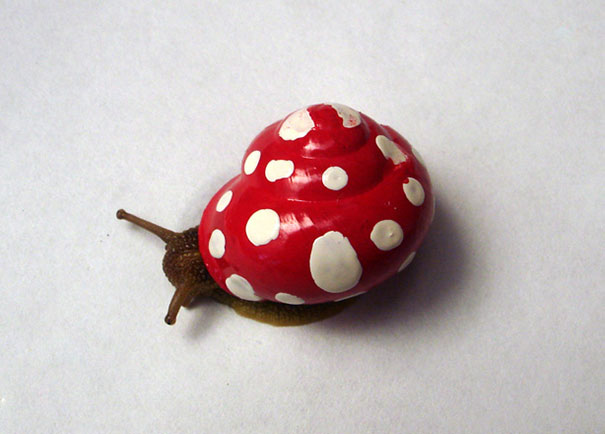 painted-snail-shell-3