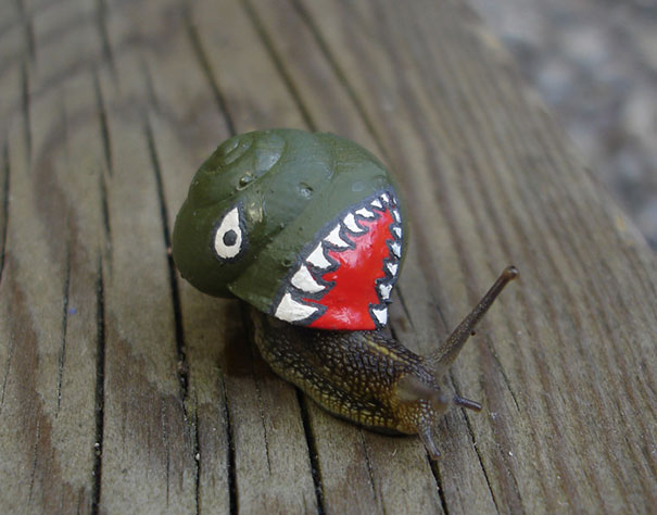 painted-snail-shell-5