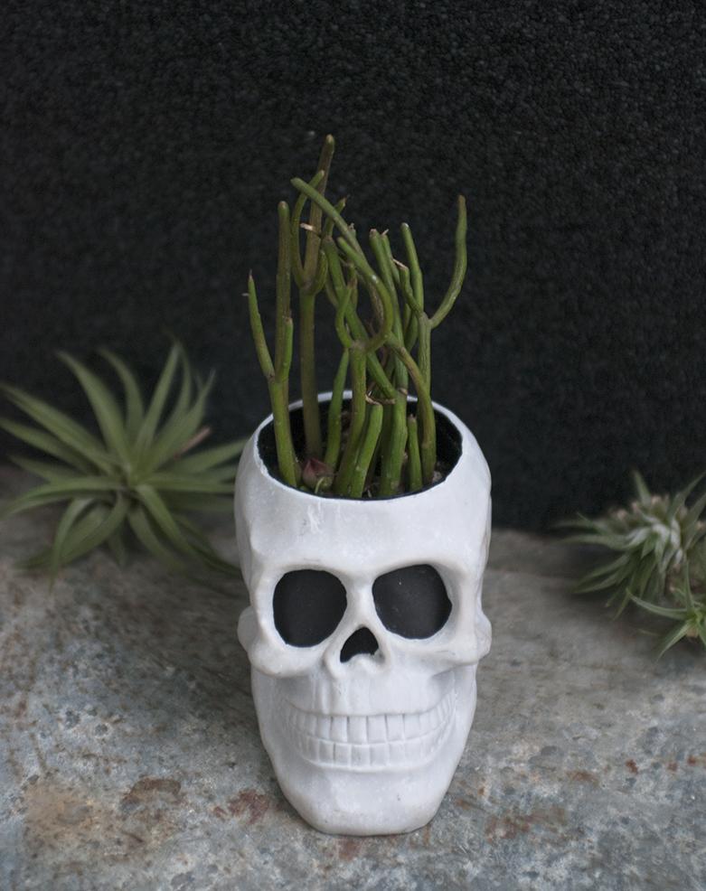 SkullPlanter-1
