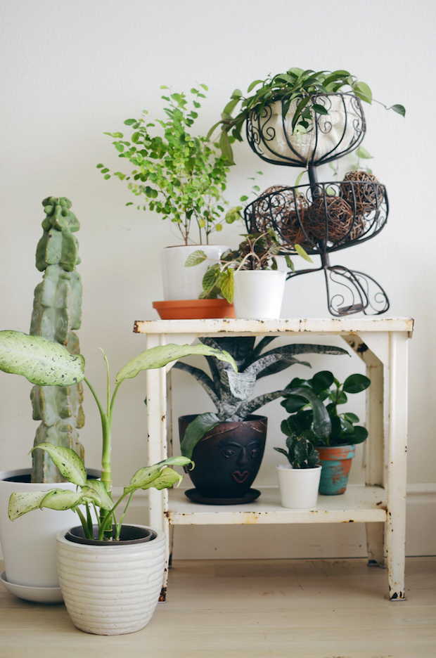 abeautifulmes_indoor_plants_01